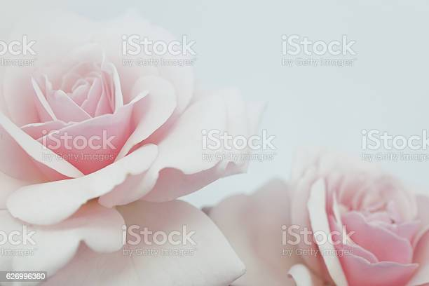 Sweet color roses in soft color for flora background picture id626996360?b=1&k=6&m=626996360&s=612x612&h=kzi13bvda9ypkhyzki46x69tu1rn bqe0qt98bwjob4=