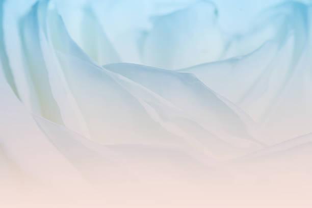 süße farben rosen in sanften farbe für valentinstag hintergrund - coral and mauve stock-fotos und bilder
