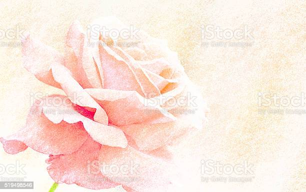 Sweet color roses in soft color for valentine background picture id519498546?b=1&k=6&m=519498546&s=612x612&h=txqbuwgkh0jykdnvyejit g tanfqj7pkhk6r59plha=
