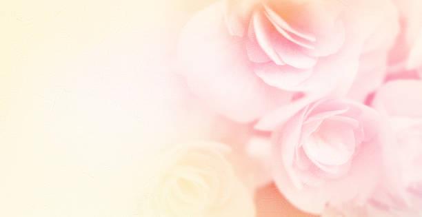 süße farben rosen im soft-look auf mulberry papier textur - coral and mauve stock-fotos und bilder