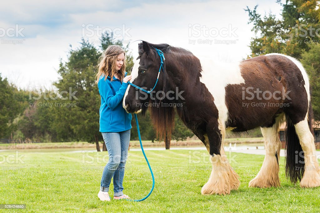 Sweet communication between girl and Gypsy Vanner horse stock photo