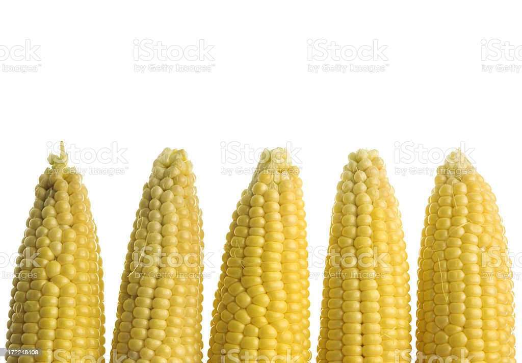 Sweet Corn Border Stock Photo & More Pictures of Backgrounds | iStock