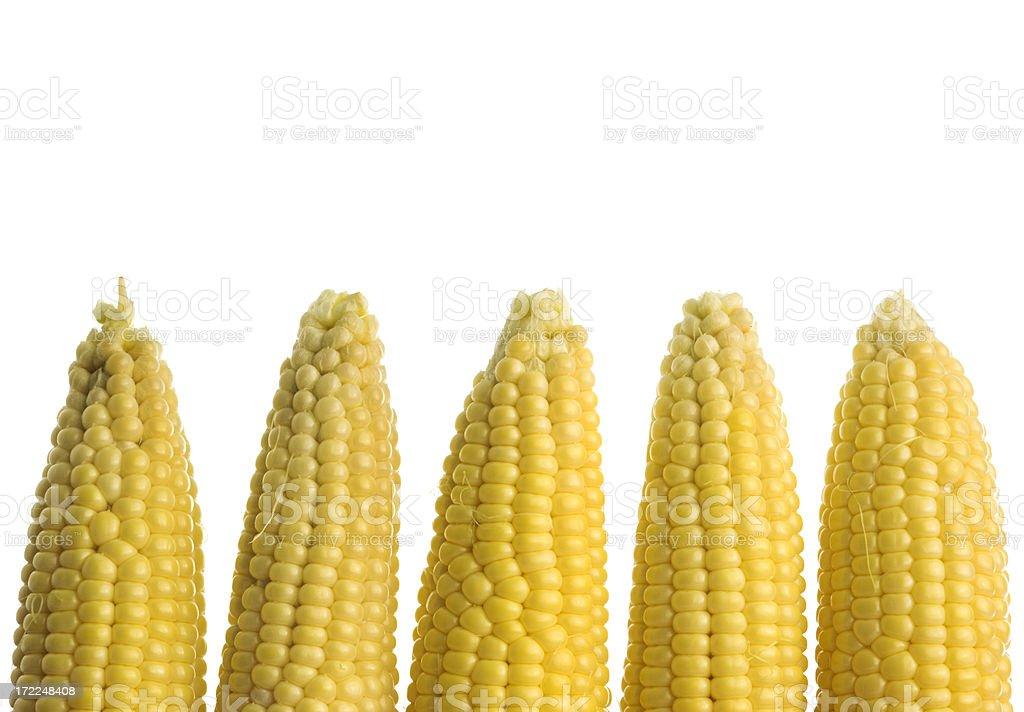 Sweet Corn Border royalty-free stock photo