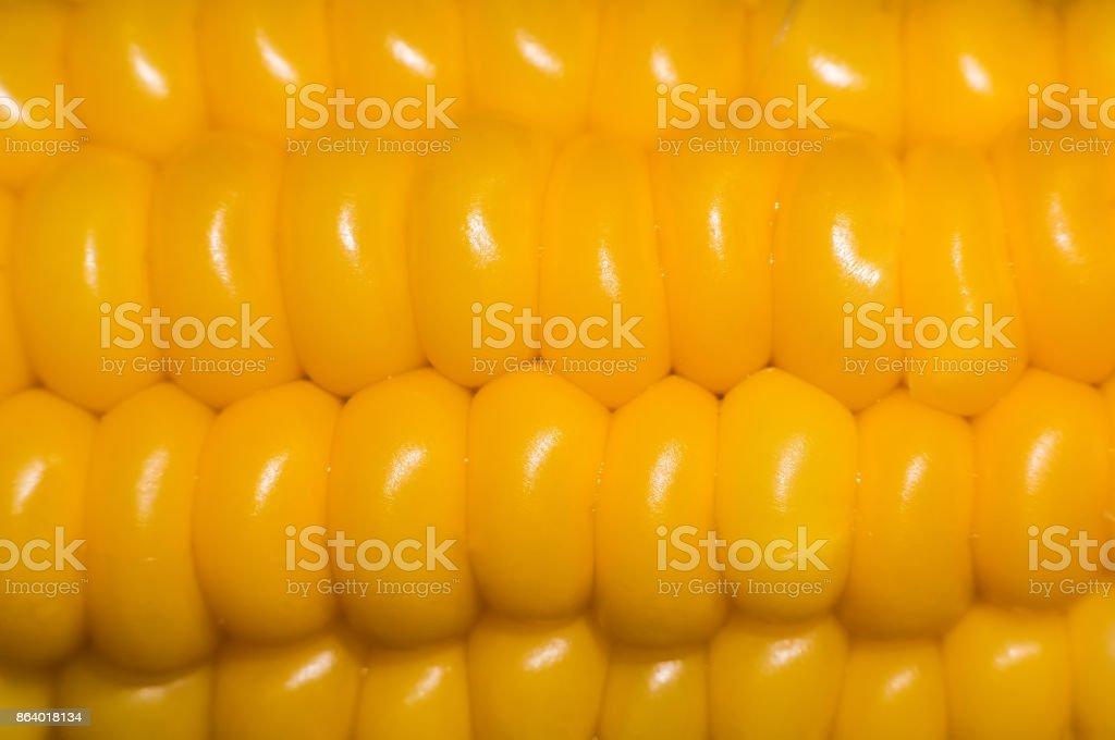 Sweet corn isolated on white stock photo