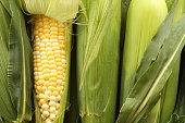 Sweet corn on the cob with one stalk peeled.