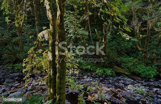 Western Oregon's Coast Range. Siuslaw National Forest. Sweet Creek Trail.
