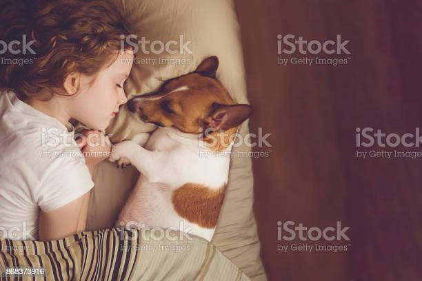 Sweet curly girl and jack russell dog is sleeping in night picture id868373916?b=1&k=6&m=868373916&s=612x612&h=dv1ylo3xoggkqlfg6apitckt tvyru5qmzhpvthdyee=