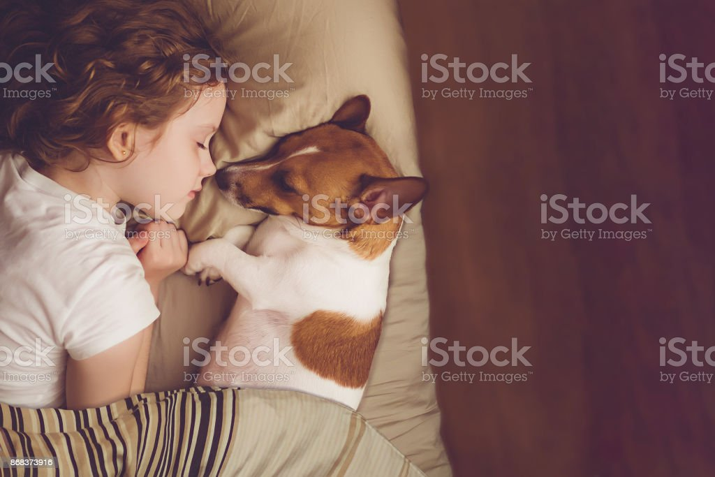 Sweet curly girl and jack russell dog is sleeping in night. stock photo