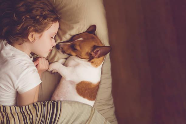 甘い巻き毛の少女とジャック ラッセル犬が夜に眠る。 - ペット ストックフォトと画像