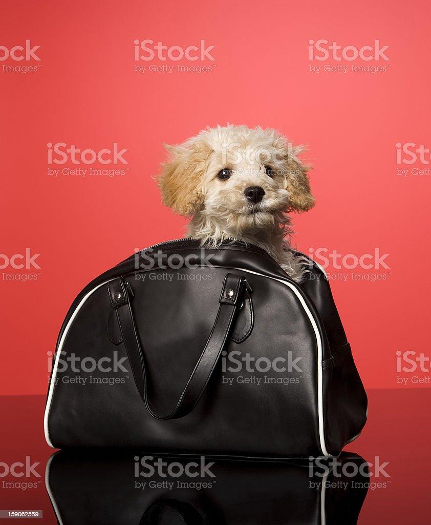 Sweet Dog royalty-free stock photo