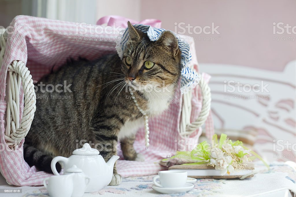 Sweet domestic cat royalty-free stock photo