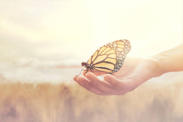 sweet encounter between a human hand and a butterfly sweet encounter between a human hand and a butterfly reincarnation stock pictures, royalty-free photos & images