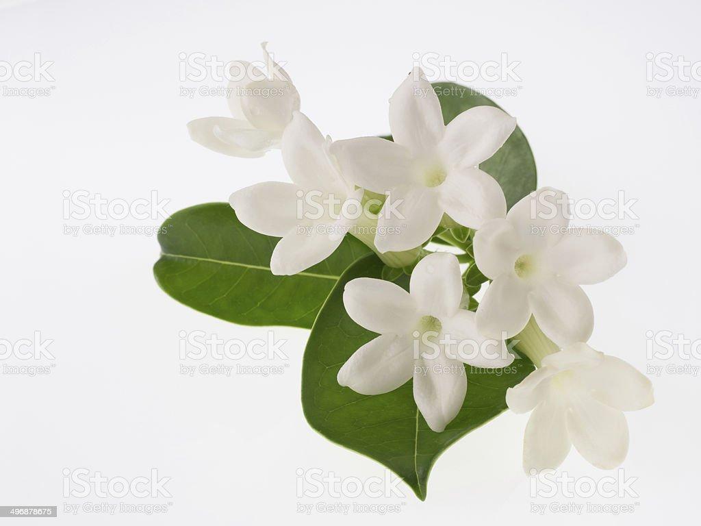 Süße Duft Malagasy Jasmin, isoliert auf weißem Hintergrund – Foto