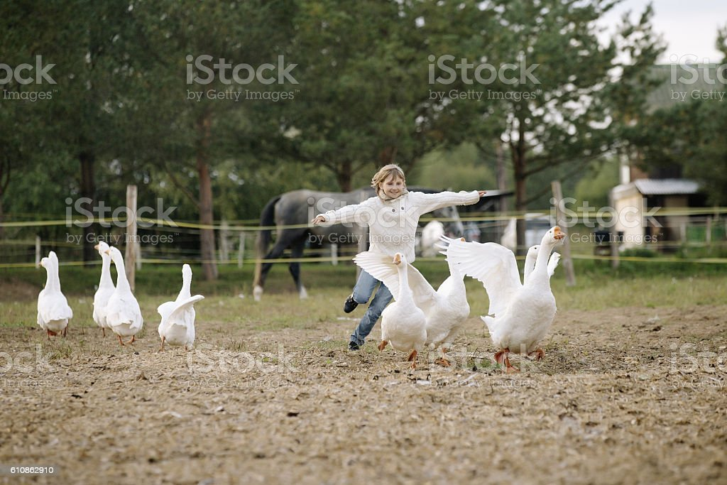 Sweet happy little girl running after flock geese on farm stock photo
