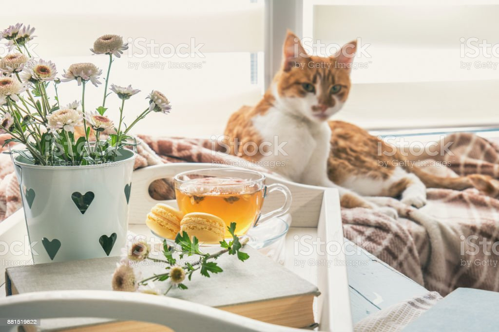 Sweet home with flowers, tea and a cat stock photo