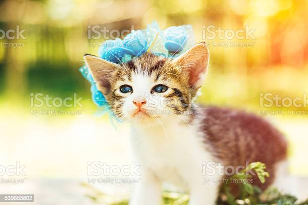 Sweet kitten and flowers picture id539653802?b=1&k=6&m=539653802&s=612x612&h=c0ag2vzvw3r85wmoma6qeoohwjfqexcorzhvxddtmn0=