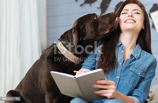 istock Sweet Labrador giving his mistress a kiss 640201750