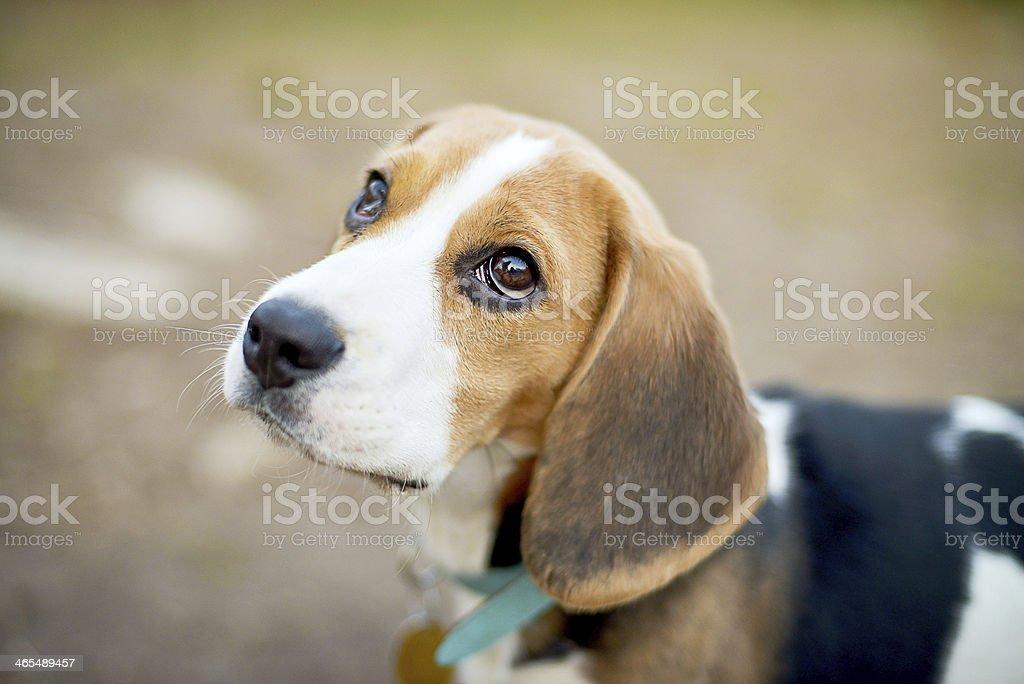 Sweet little dog stock photo