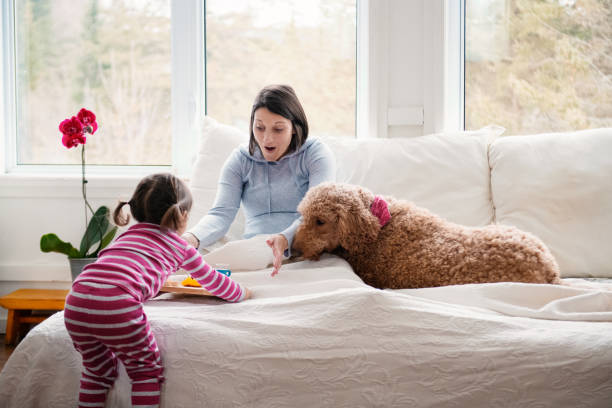 sweet little girl brings breakfast at bed during mother's day - manonallard stock photos and pictures