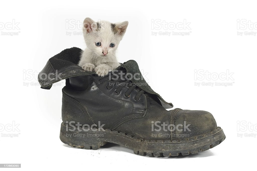 Sweet Little Kitty Cat in a Big Shoe royalty-free stock photo