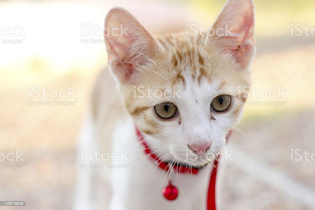Sweet little kitty stock photo