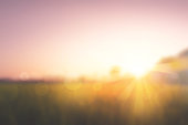 istock Sweet meadows at sunrise blurry background 1184121472