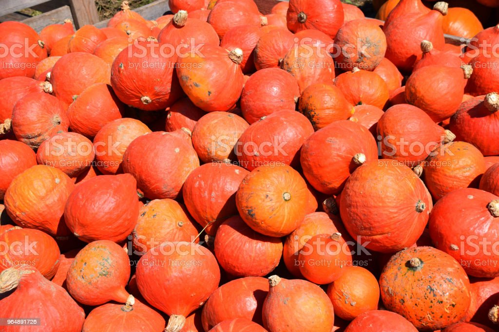 sweet meat red squashes royalty-free stock photo