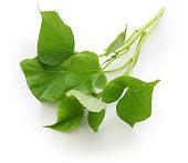 sweet potato leaves greens