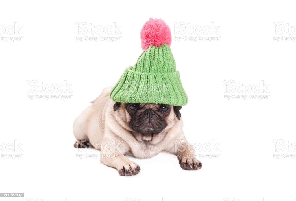 zoete pug puppy hondje liggen en op zoek chagrijnig, dragen groene gebreide muts met pompom roze, geïsoleerd op witte achtergrond foto