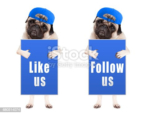 istock sweet pug puppy dog with blue follow us and like us sign and wearing blue cap, isolated on white background 680514074