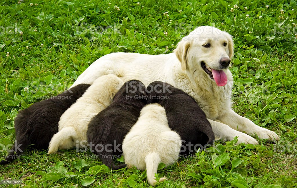 sweet puppies having lunch royalty-free stock photo