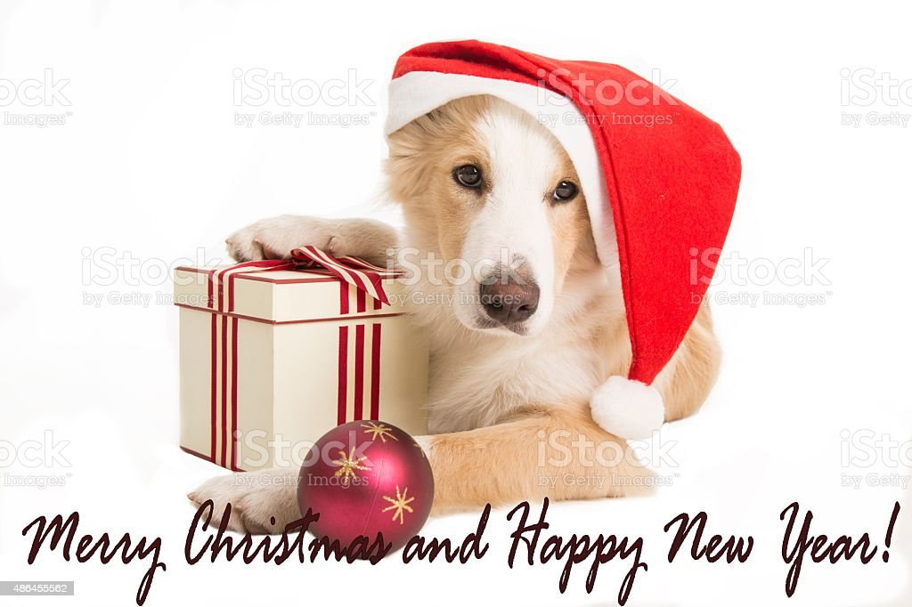 Sweet Santa Claus dog for xmas time stock photo