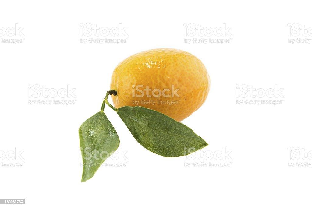 Sweet Small Orange royalty-free stock photo