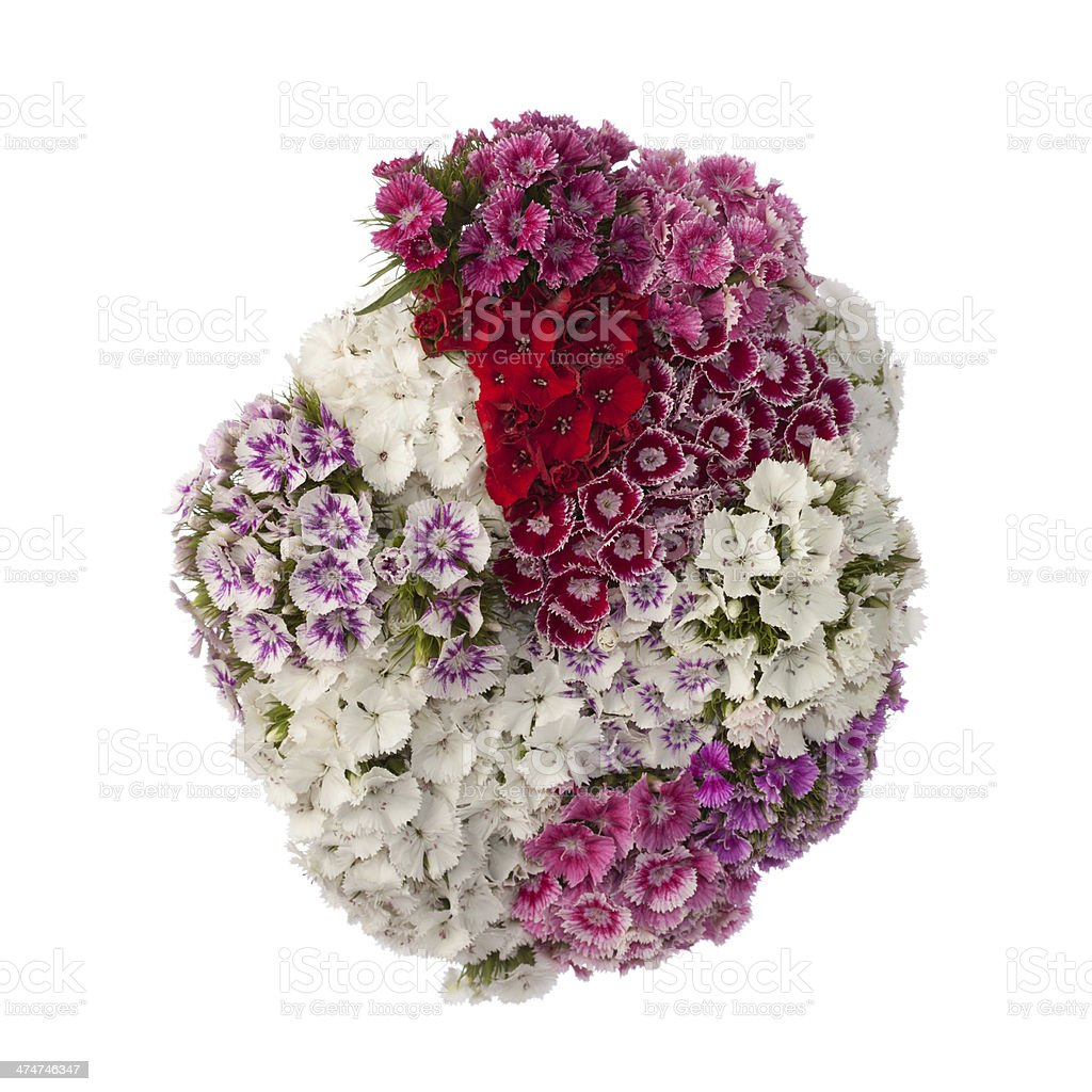Sweet William Flowers On White Background Stock Photo More