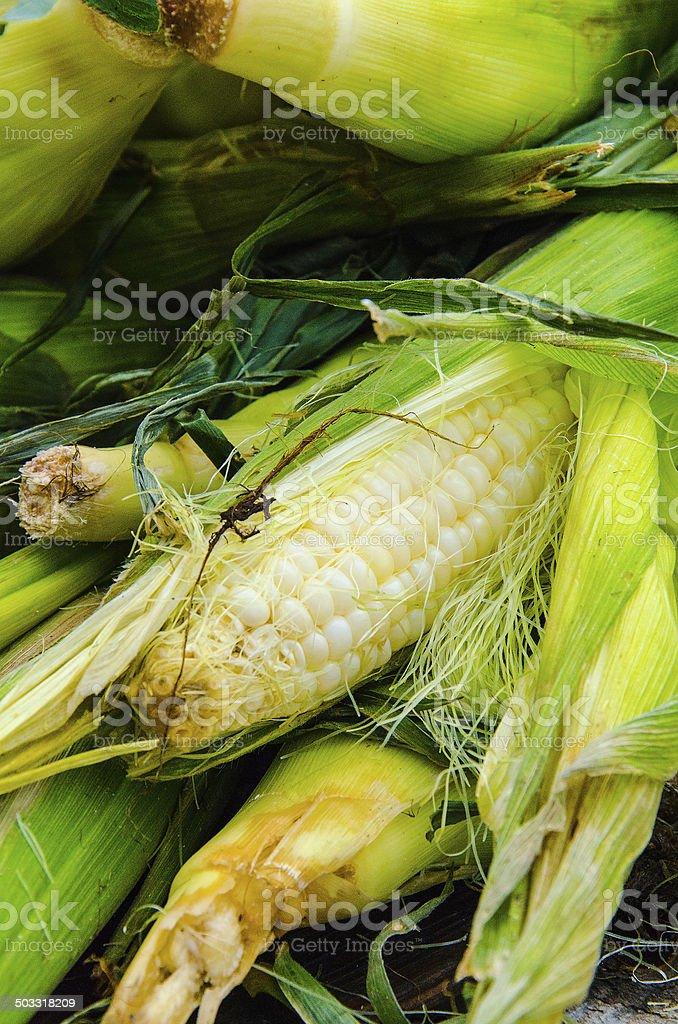 Sweet Yellow Corn royalty-free stock photo