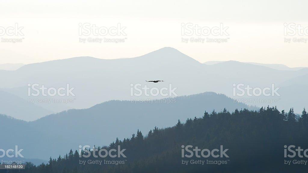 Swift eagle royalty-free stock photo