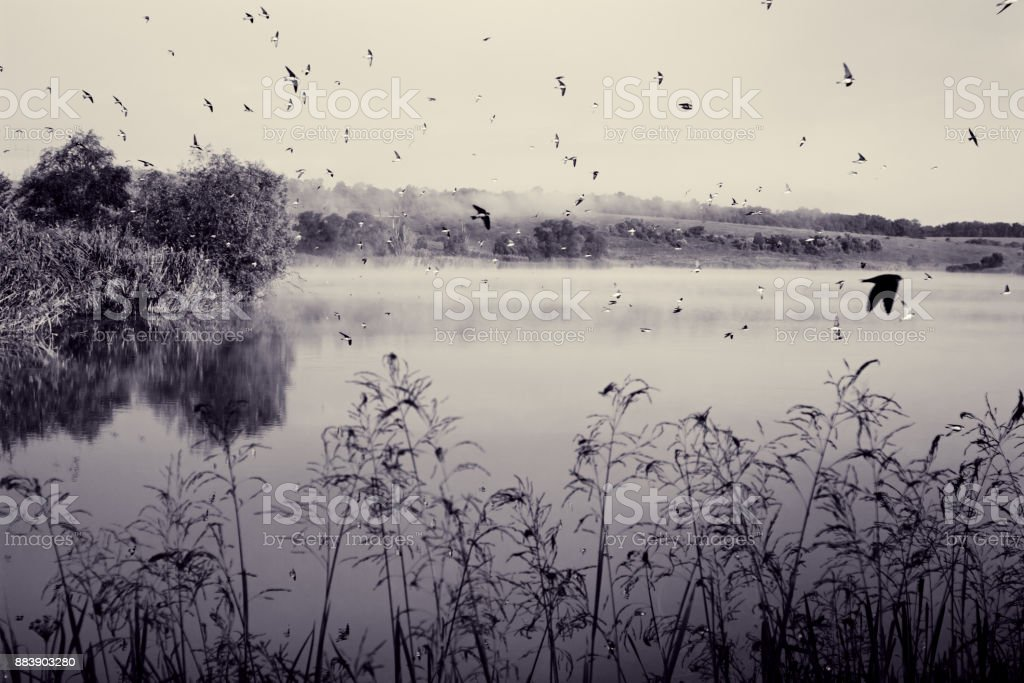 Swifts above water stock photo