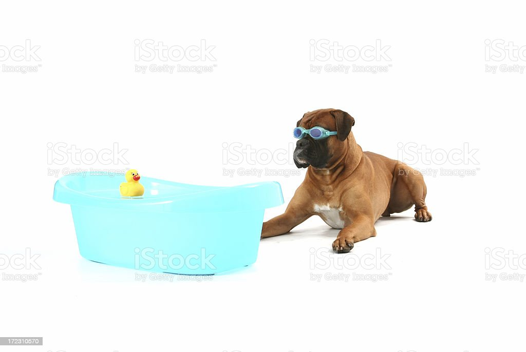 Swimer with duck toy royalty-free stock photo