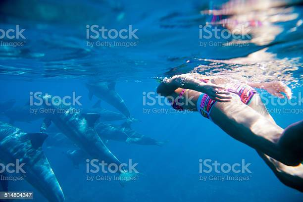 Swiming in the indian ocean with dolphins picture id514804347?b=1&k=6&m=514804347&s=612x612&h=7wnu4fpmrgze ilhwbuuv senqiiqqiircib xw7x c=