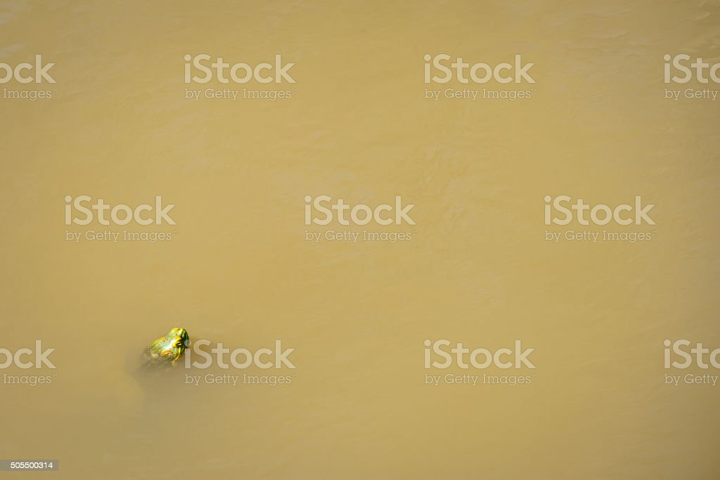 Swiming Turtle stock photo
