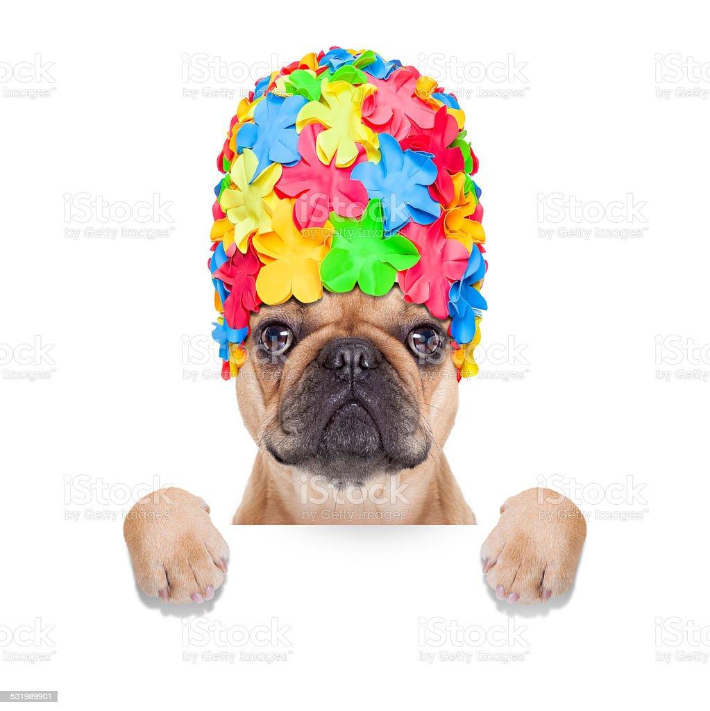 swimming cap dog stock photo