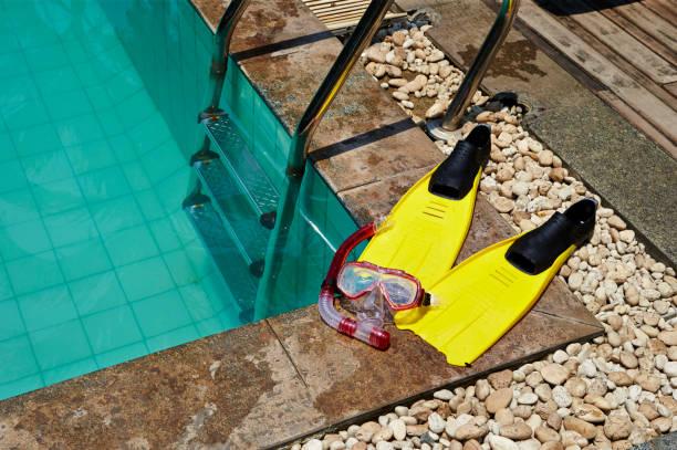 수영 장비 - 오리발 뉴스 사진 이미지