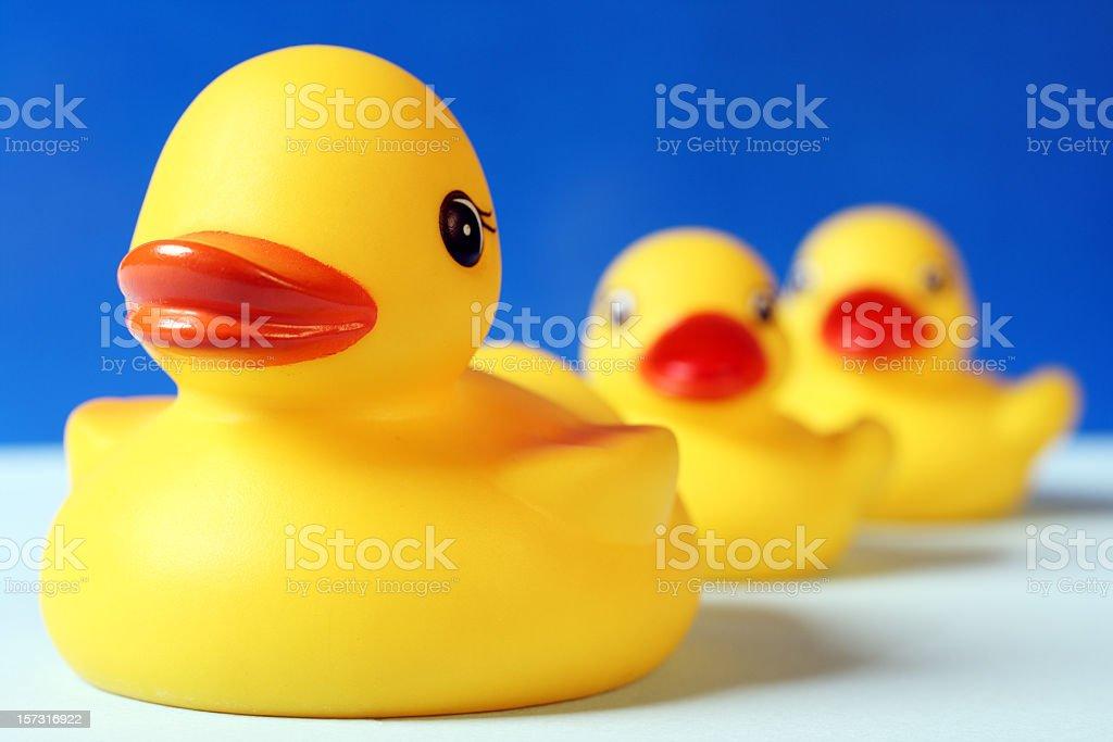 Swimming family of rubber ducks stock photo