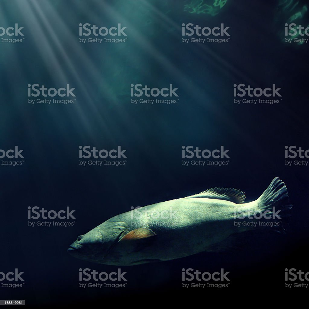 swimming fish and light royalty-free stock photo