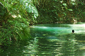 Woman swimming in a water hole in the jungle (Daintree/National Park, Queensland/Australia).