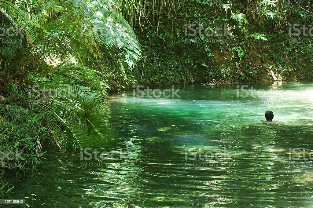Swimming in the Jungle stock photo