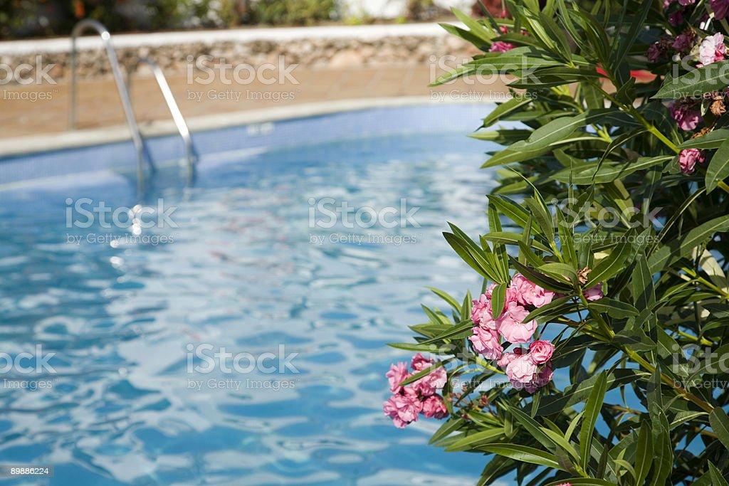 Piscina y flores foto de stock libre de derechos