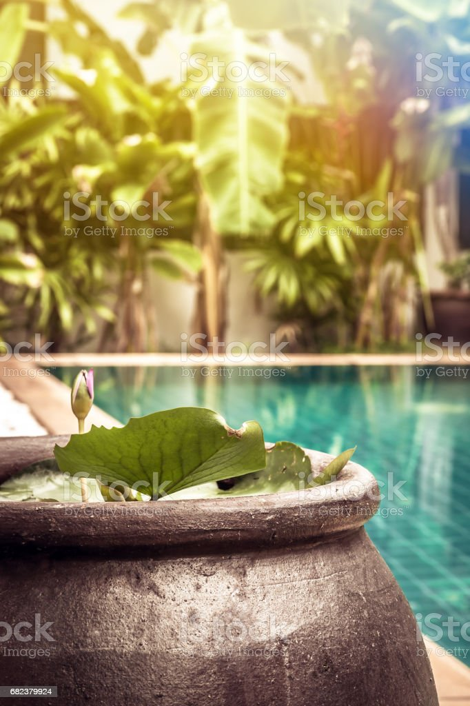 Swimming pool area with decoration bowl with water lily among lush tropical garden with sunshine at private luxury tropical villa backyard stock photo