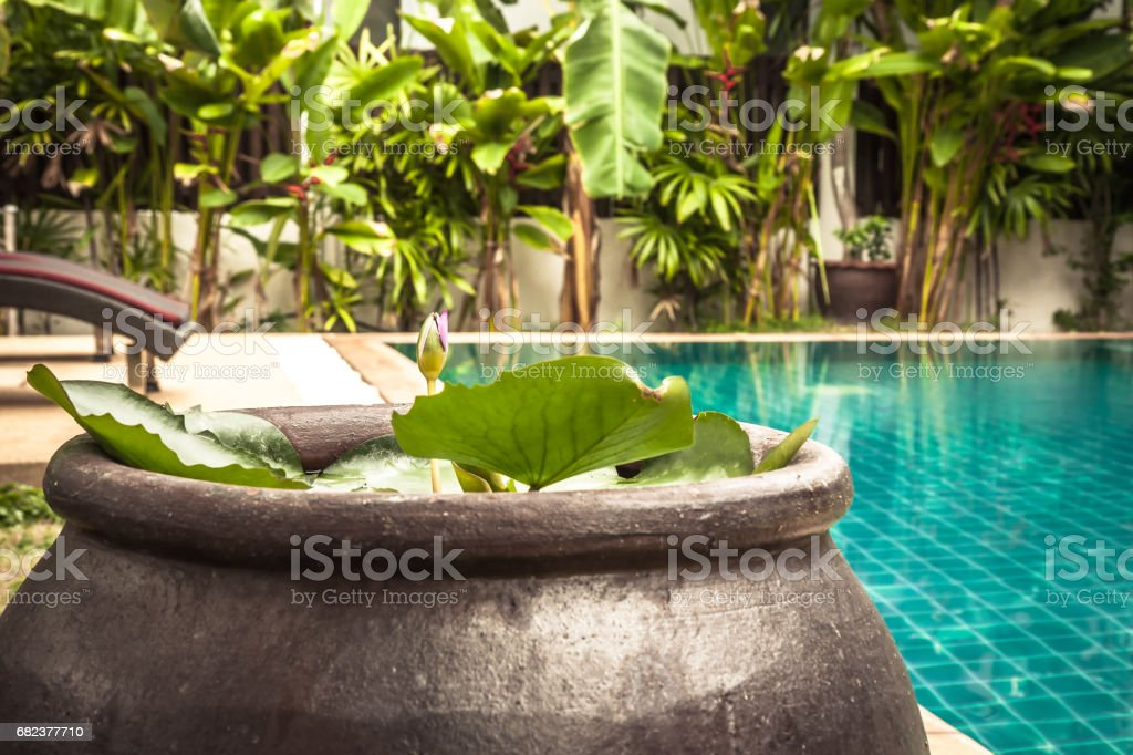 Swimming pool area with decoration bowl with water lily at private villa backyard stock photo