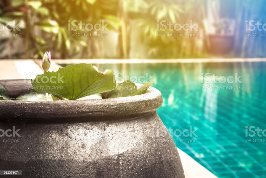 Swimming pool area with decorative asian style bowl with water lily among lush tropical garden with sunlight and copy space at private luxury tropical villa backyard stock photo